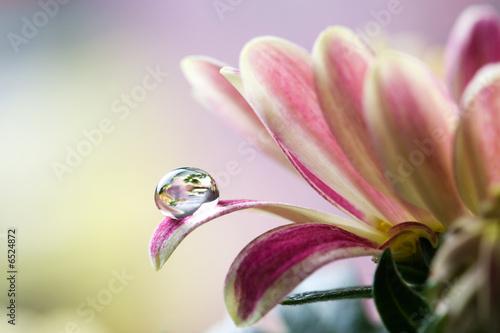 Foto-Schiebegardine ohne Schienensystem - Flower (von Kati Finell)