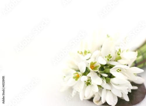 Poster de jardin Nénuphars Spring flowers snowdrops