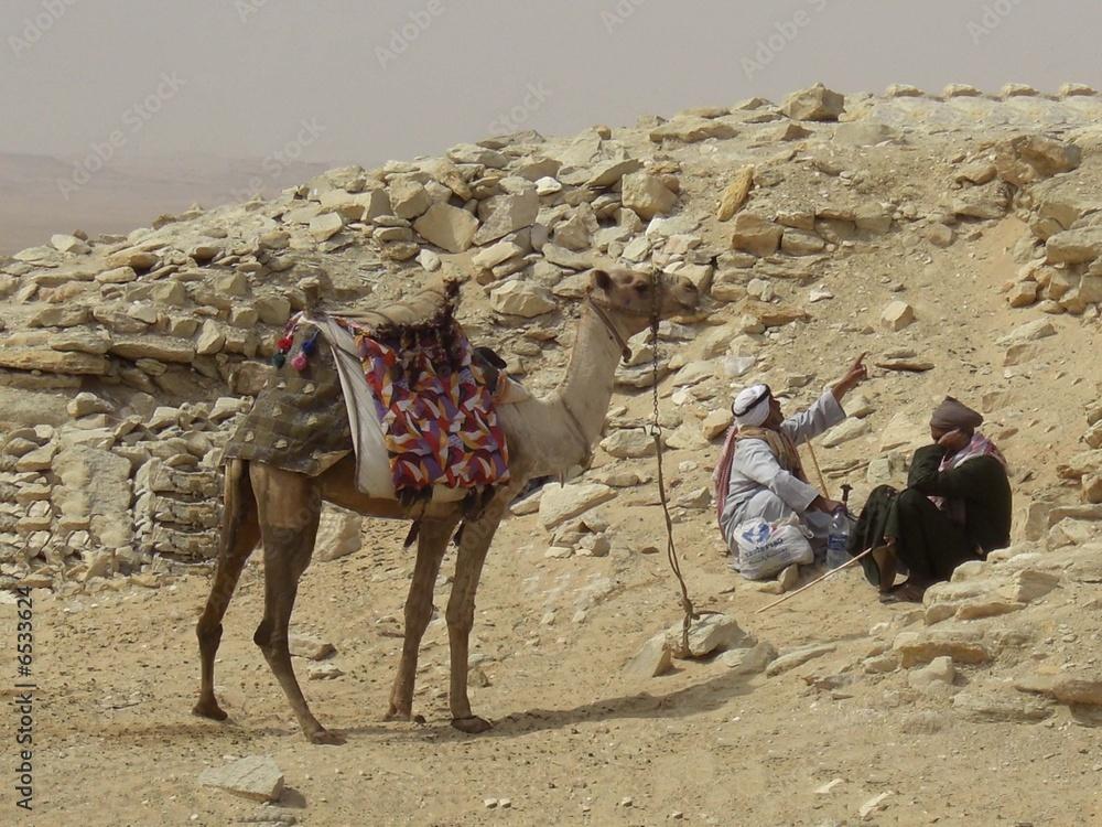 Egypte dromadaire et chameliers