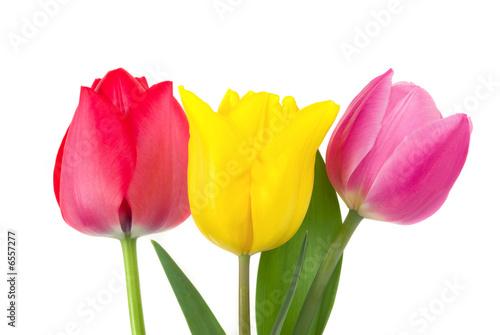 Poster Fleuriste Tulips