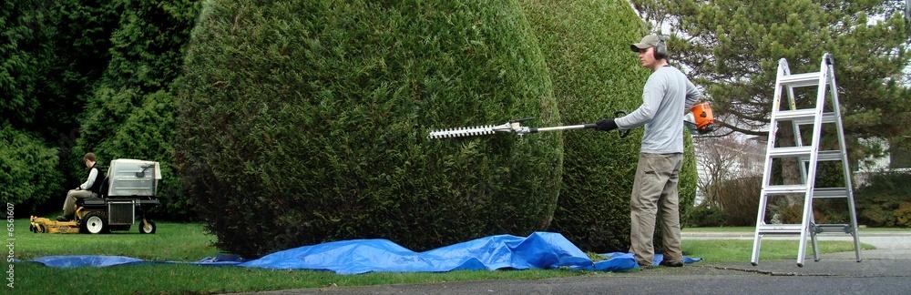 Fototapety, obrazy: landscape maintenance