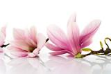 Fototapeta Kwiaty - flowers