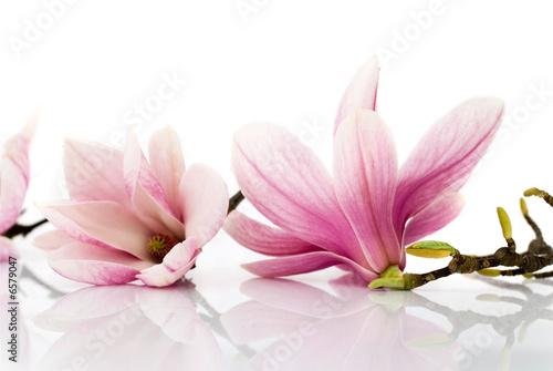 Foto-Schiebegardine ohne Schienensystem - flowers