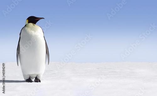Photo sur Toile Pingouin Penguin