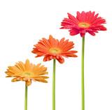 Fleurs colorées