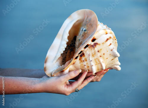 Canvastavla Conch shell