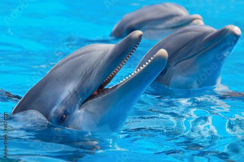 Fototapeta premium happy dolphins