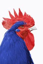 Coq France Bleu Blanc Rouge