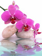 canvas print picture - Wasser,Orchidee