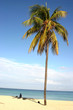 Palm on Cuban beach