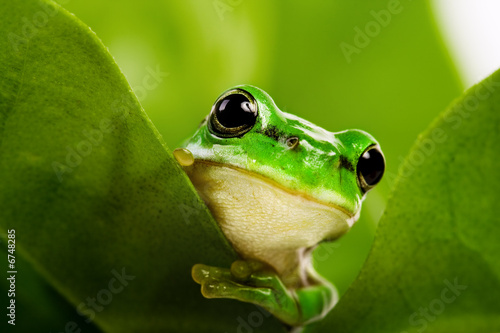 Photo sur Aluminium Grenouille Frog peeking out