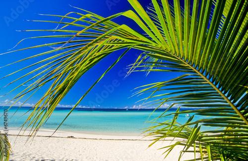 Foto-Schiebegardine Komplettsystem - plage et palmier