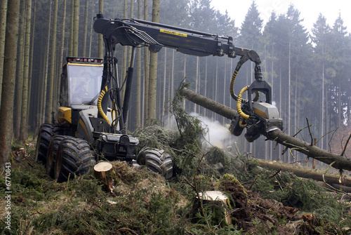 Holzvollernter, Harvester, Wald, Copyspace Wallpaper Mural