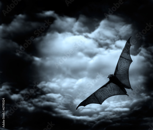 Fotografie, Obraz  bat flying in the dark cloudy sky