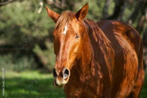 Valokuva  cavallo