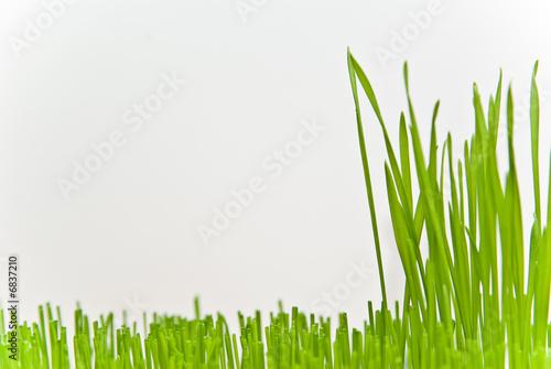 Valokuva  grass