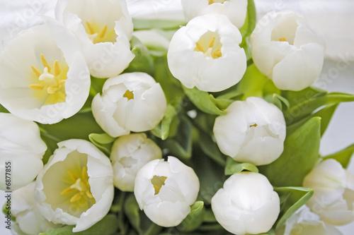 Foto auf Gartenposter Tulpen Tulp top