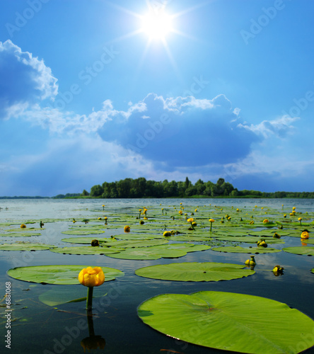 Poster de jardin Nénuphars water lilly blossoms