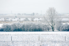 Winter View On Countryside