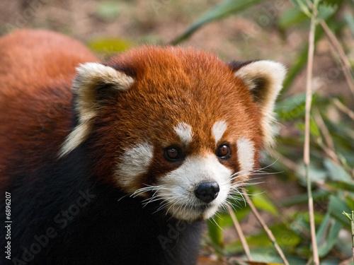 In de dag Panda bs-chi-P4063228