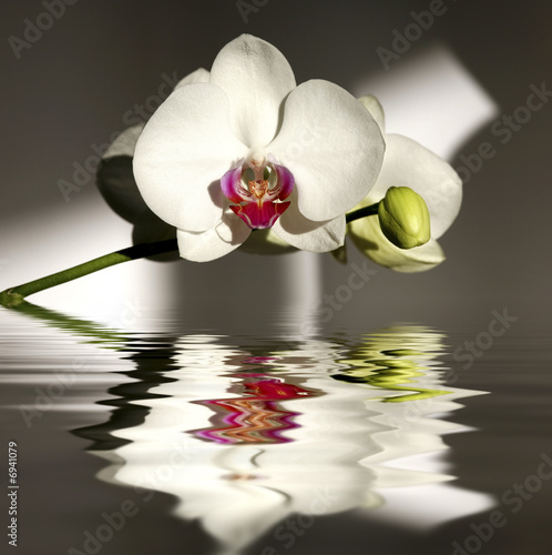 Papiers peints Orchidée Orchidée
