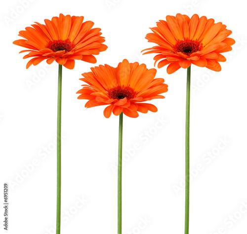 Foto-Schiebegardine ohne Schienensystem - Fleurs oranges