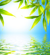 canvas print picture Bamboo leaves reflected in rendered water