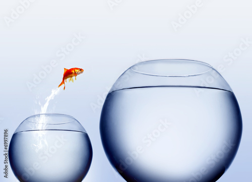 goldfish jumping out of the water Fototapet