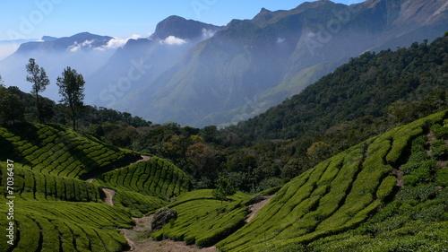 In de dag India plantations de thé, Kerala - Inde
