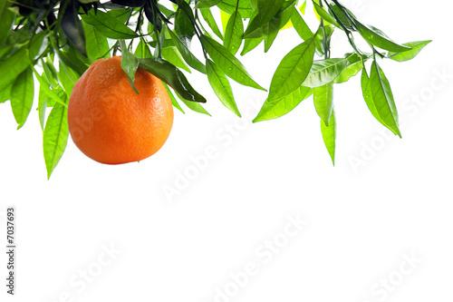 Orange Branch Tapéta, Fotótapéta