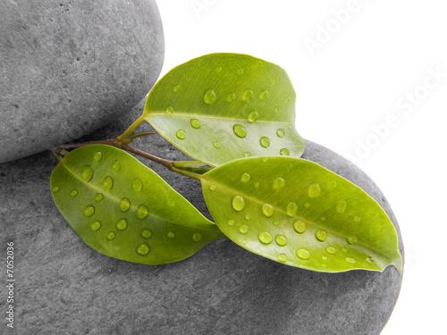 feuille et pierre ZEN