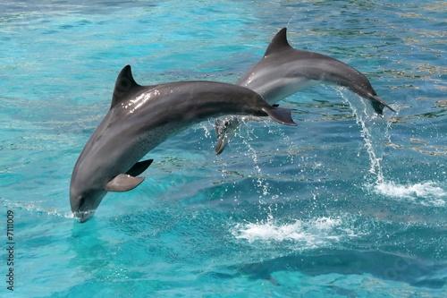 Foto op Plexiglas Dolfijnen Jumping Dolphins