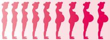 Pregnant Woman (Girl) Months 1-9