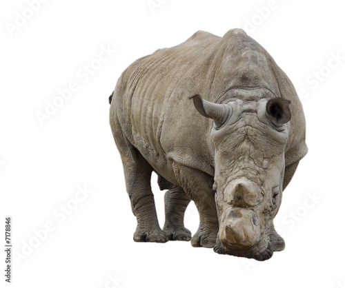 Foto op Aluminium Olifant white rhinoceros isolated on white