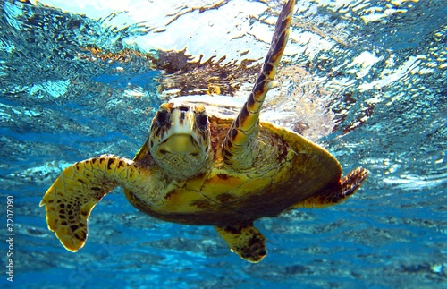 Foto op Canvas Schildpad sea turtle