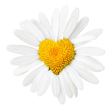 Daisy With Heart In Center