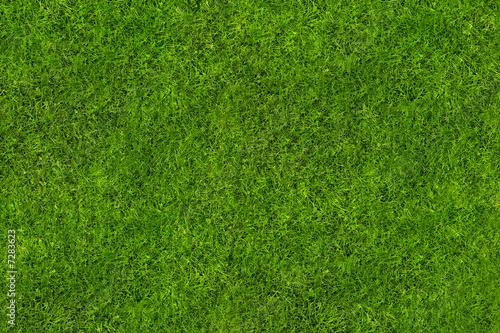 Deurstickers Gras EM Rasen