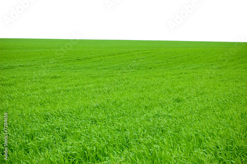 Foto auf Gartenposter Hugel green grass isolated