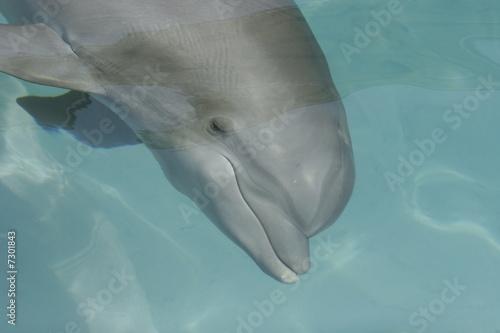 Foto op Plexiglas Dolfijnen underwater dolphin