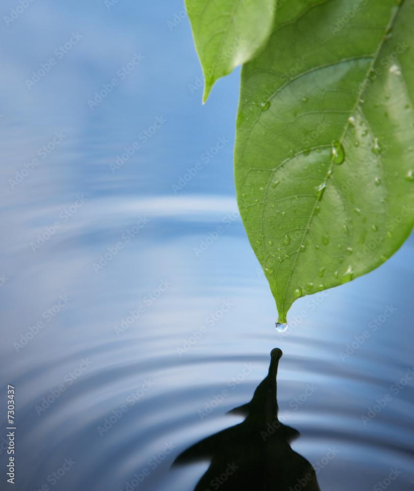 Doppelrollo mit Motiv - water drop