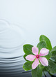 canvas print picture - flower plant and water ripple