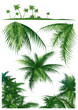canvas print picture Tropical_leaf