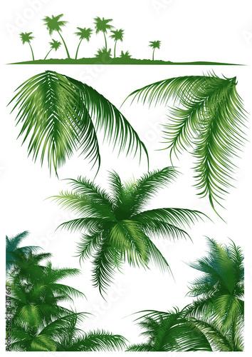 tropical-leaf