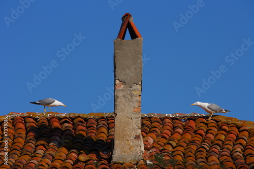 Valokuva  Two gulls contest territory on tiled roof
