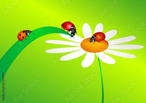 Aluminium Prints Ladybugs Ladybird