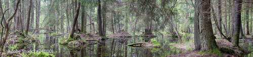 Papiers peints Forets Natural swampy forest panorama