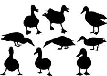 Mallard Duck  Silhouettes