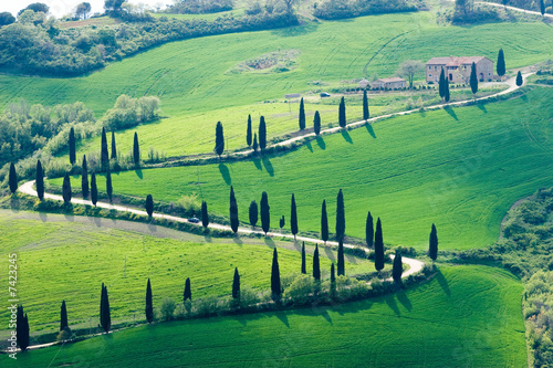 Papiers peints Toscane tuscany green nature