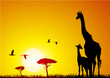 canvas print picture Giraffe and pup at sunset