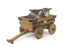 Kittens In A Wagon
